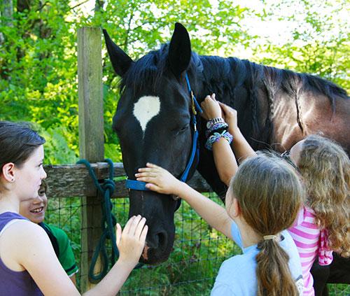 Campus centri estivi scuola equitazione roma for Circolo bdr soggiorni estivi
