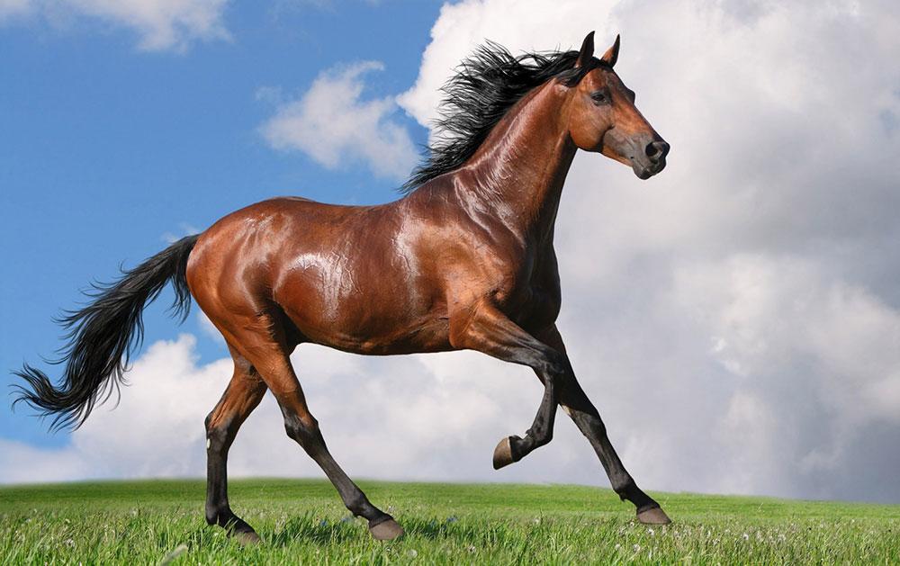 scuola-equitazione-roma-alimentazione-cavallo