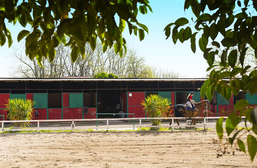 pensione-cavalli-roma-circolo-ippico-flaminio-
